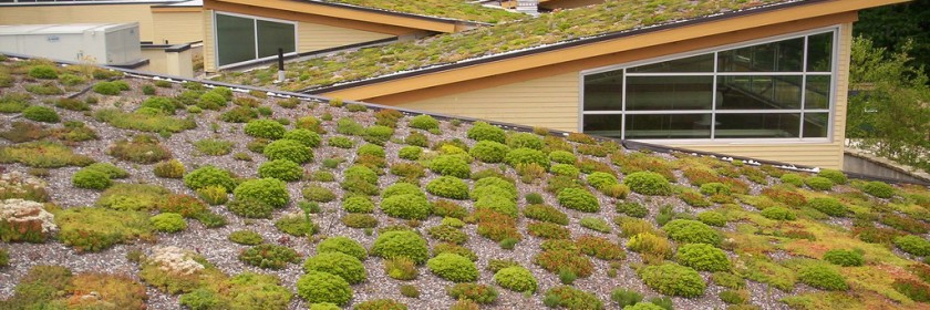 Gatineau roofing can benefit from green roof options.