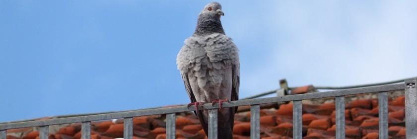 Oiseau sur une toiture