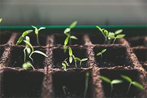 RAFRAICHIR VOTRE VILLE - plante