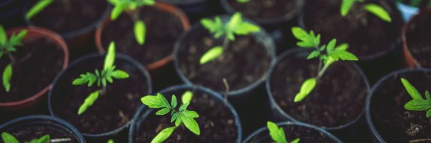 pots de terre avec des plantes